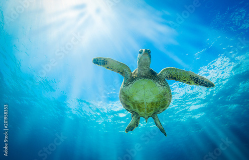 Tuinposter Schildpad Turtle Belly
