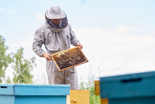 Portrait Of Unrecognizable Beekeeper Holding  Honeycomb  Frame While Harvesting Honey In Apiary, Copy Space
