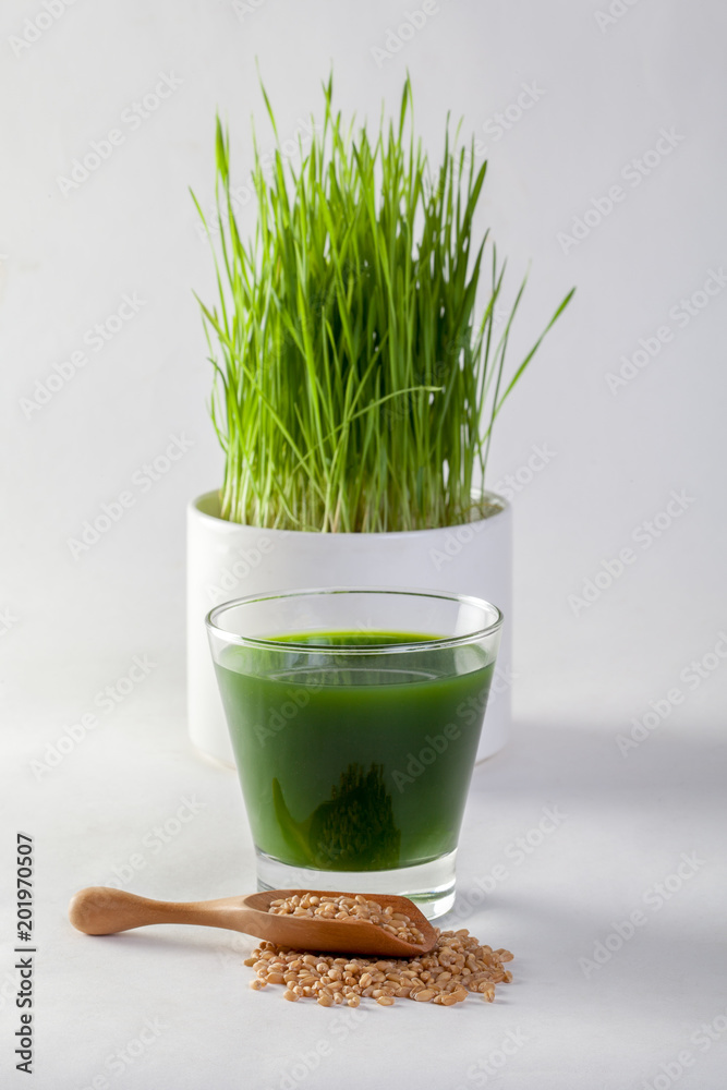 Fototapeta Wheat grass juice on white background