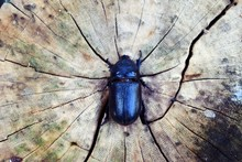 Black Beetle Stand On The Crac...