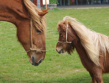 Big And Small Horse