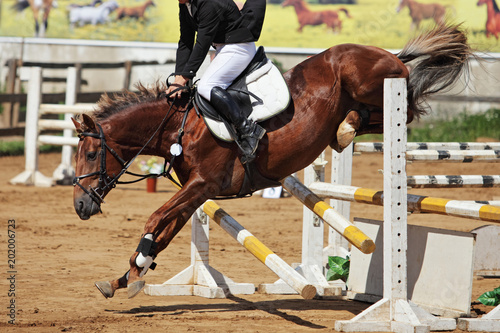 Cuadros en Lienzo Horse falling in jumping tournament, over or between jumps