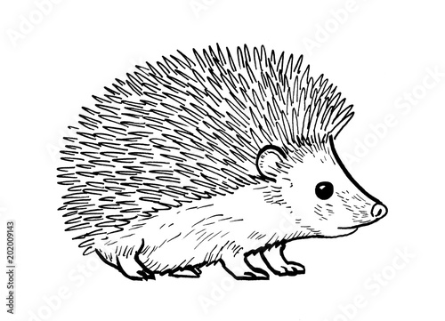 Drawing of hedgehog - hand sketch of mammal, black and white illustration Poster Mural XXL