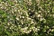 canvas print picture - Flora
