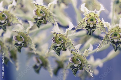 Tuinposter Textures Flower Macro Shot