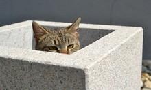 Scared Tabby Kitten Hiden In F...