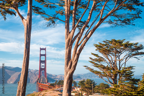 Golden Gate Bridge with cypress trees at Presidio Park, San Francisco, California, USA
