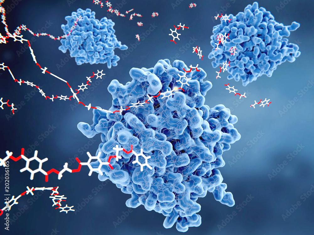 Fototapeta PETase-Enzymen bauen PET-Molekülen zu monomeren Bausteinen ab. Die PETase ist ein bakterielles Enzym mit Plastik-Recycling Potential.