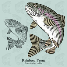 Rainbow Trout. Vector Illustration With Refined Details And Optimized Stroke That Allows The Image To Be Used In Small Sizes (in Packaging Design, Decoration, Educational Graphics, Etc.)