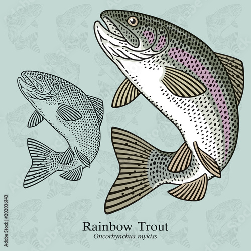 Rainbow Trout Canvas-taulu