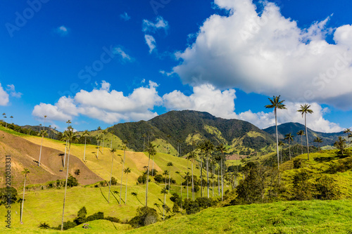 Foto op Canvas Zuid-Amerika land Bosque De Palma De Cera La Samaria near San Felix near Salamina Caldas in Colombia South America