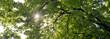 Blätterdach mit Sonnenstrahlen