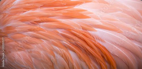 Garden Poster Flamingo Flamingo feather background