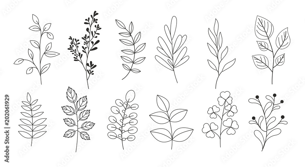 Fototapeta Vector illustration set of branches, leaves, twigs, garden grasses in line style for floral patterns, bouquets and compositions in white background. Elements for greeting cards.