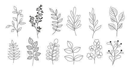 Vector illustration set of branches, leaves, twigs, garden grasses in line style for floral patterns, bouquets and compositions in white background. Elements for greeting cards.