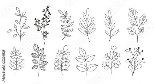 Fotografia Vector illustration set of branches, leaves, twigs, garden grasses in line style for floral patterns, bouquets and compositions in white background