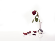 Single Red Rose In Vase On White Background
