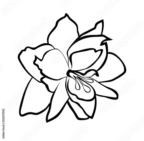 Cuadros en Lienzo Vector illustration, isolated Amaryllis flower in black and white colors