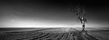 Panoramic View Of Alone Tree On The Field.