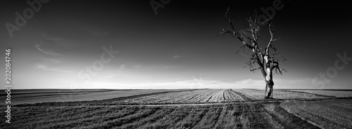 Photo sur Aluminium Gris Panoramic view of alone tree on the field.