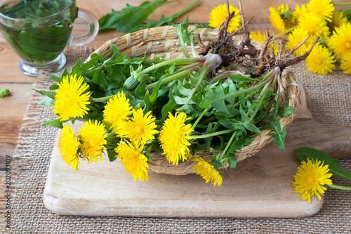 Whole dandelion plants with roots in a basket