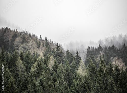 Las w Alpach