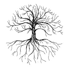 Tree Of Life - Vector Illustra...