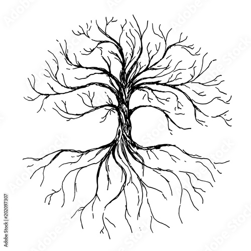Tablou Canvas Tree of life - vector illustration with tree and roots silhouette