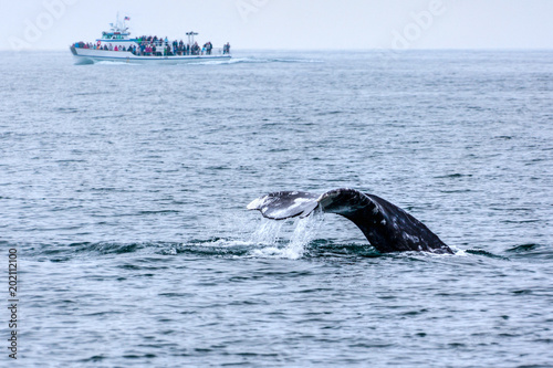 Whale Watching in Southern California
