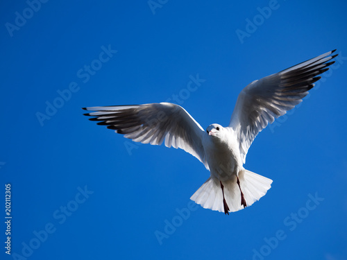 Photo 青空とカモメ