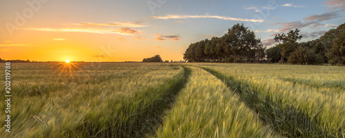 Ingelijste posters Platteland Tractor Track in Wheat field at sunset