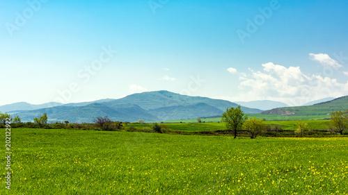 Green spring meadows