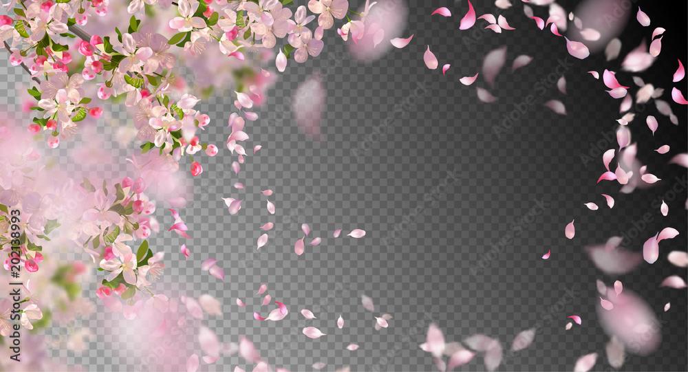 Fototapety, obrazy: Spring Cherry Blossom