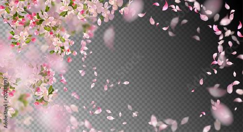 Fotografija Spring Cherry Blossom