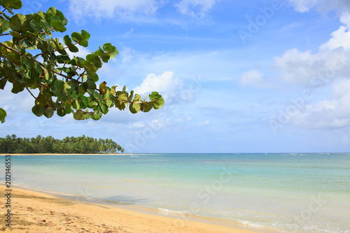 Poster Oceanië Caribbean sea and tree branch background.