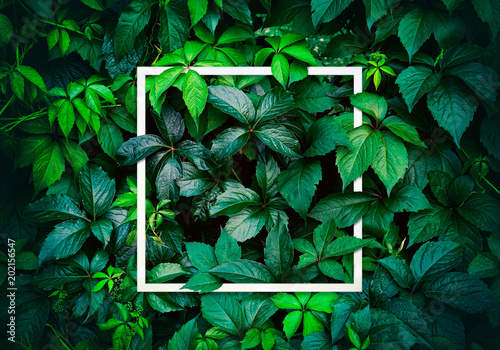 Nature concept. Layout with texture a green leaf close-up. Background with Leaves vintage dark green color and white frame.