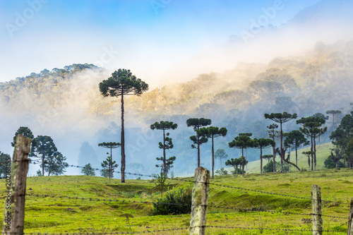 Paisagem rural Canvas Print