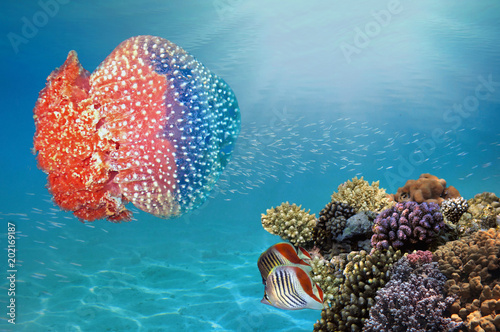 Poster Sous-marin Giant jellyfish swimming with tentacles following underwater
