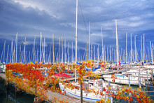 Yachts In The Port