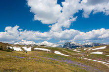 Majestic View Of Blooming Spring Crocuses In Mountains.