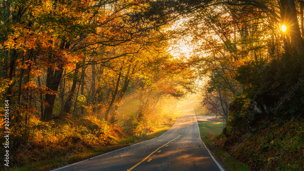 Fototapeta Streaming Sunlight on a North Carolina Country road in Autumn