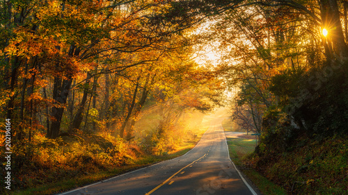streaming-sunlight-na-north-carolina-country-road-jesienia
