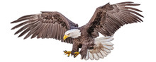 Bald Eagle Flying Swoop Hand D...