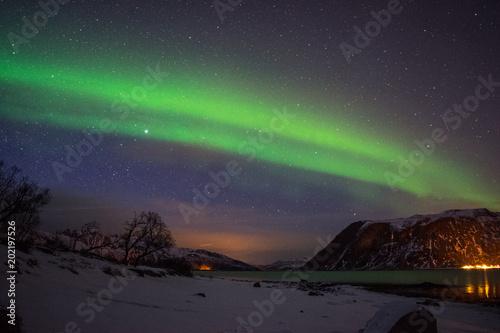 Foto op Aluminium Aubergine Artic