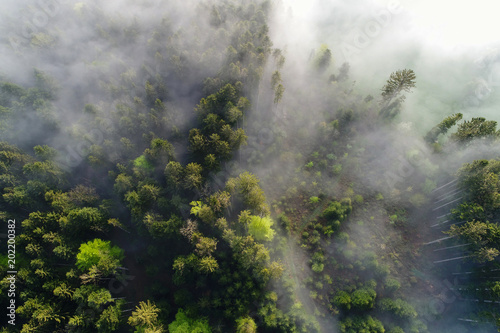 Aerial view Fog clouds pulling on a spring morning in Switzerland through the forest