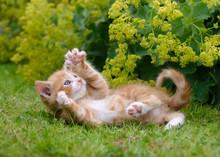 Cute Kitten Playing In A Flowe...