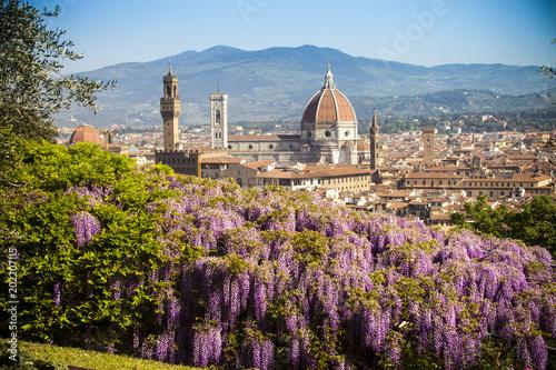Italia, Toscana, Firenze, Giardino bardini, la fioritura del glicine Wallpaper Mural