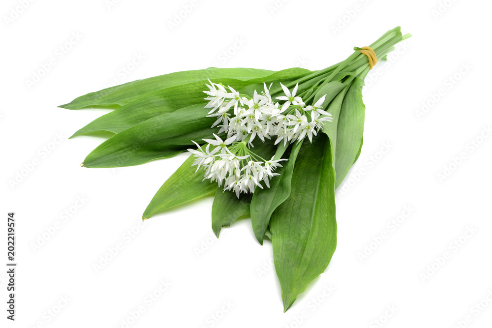 Fototapeta Bunch of ramson wild garlic flower heads and leaves on white isolated background