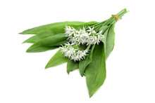 Bunch Of Ramson Wild Garlic Flower Heads And Leaves On White Isolated Background