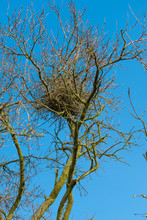 A Typical Nest Of A Magpie